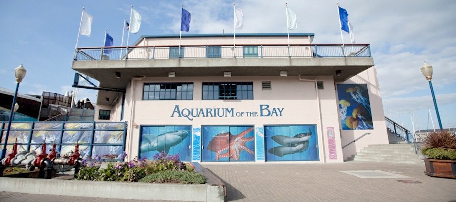 Must Do: Aquarium by the Bay on San Francisco's Pier 39 ...