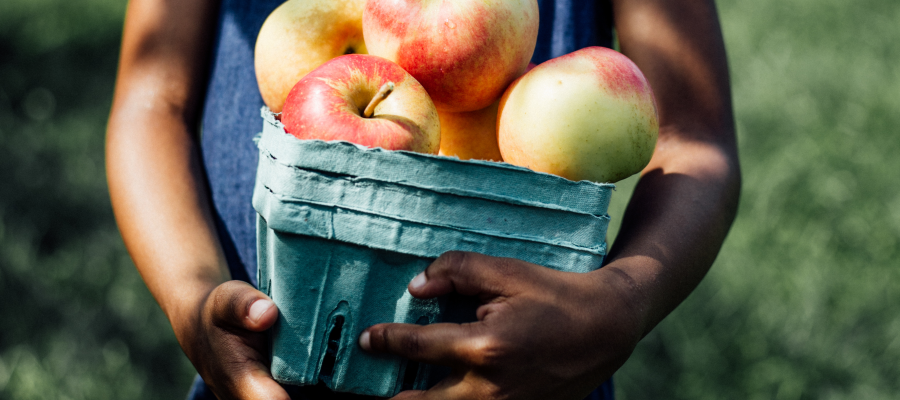 Best Places To Go Apple Picking Near Chicago Mommy Nearest