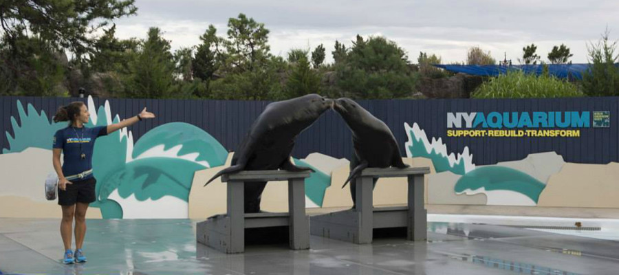 Why The New York Aquarium Is Worth A Visit Mommy Nearest