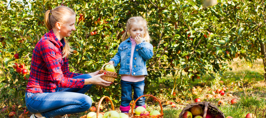 5 Places To Go Apple Picking In The Bay Area Mommy Nearest