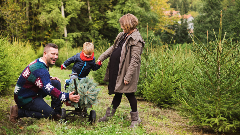 Christmas Tree Farms - Where To Cut-Your-Own Christmas Tree In The Washington, D.C. Area