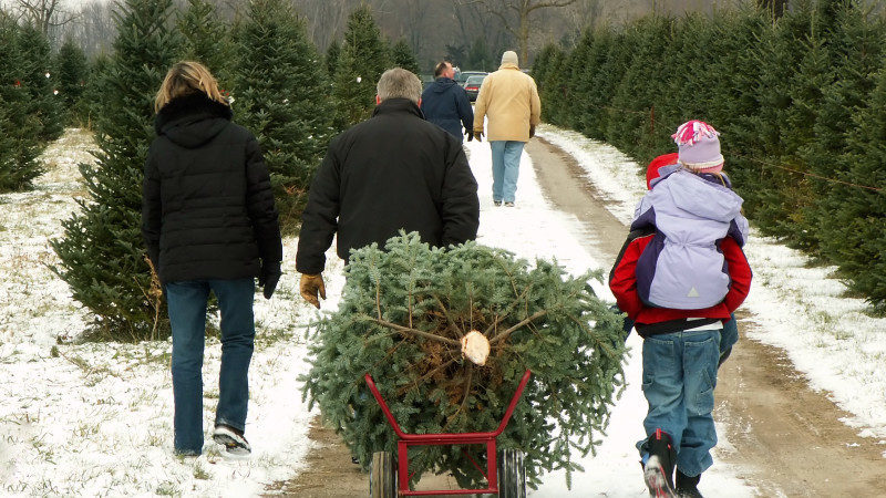 Where to Cut-You-Own Christmas Tree in Los Angeles - Mommy Nearest