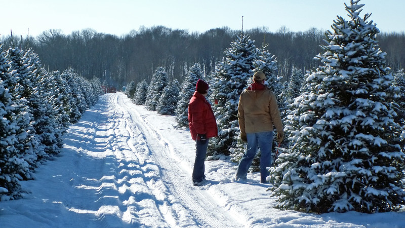 5 Places to Cut-Your-Own Christmas Tree Near Chicago - Mommy Nearest