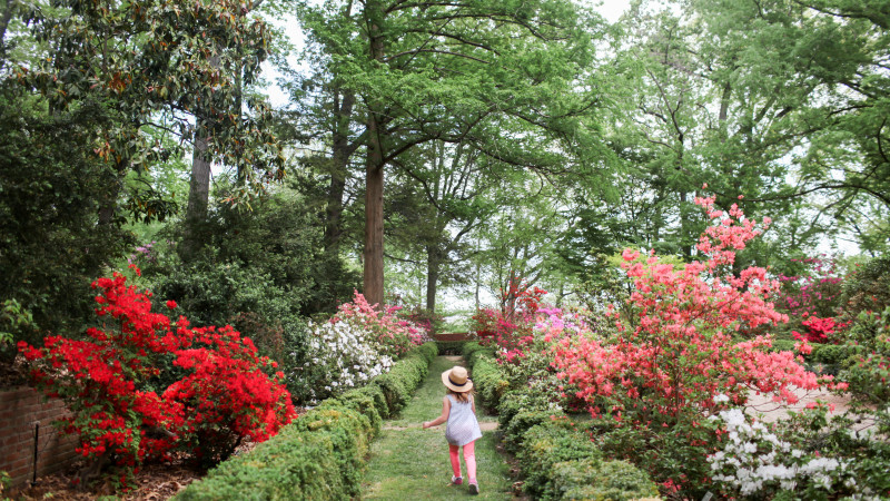 What To See And Do At The U S National Arboretum In D C Mommy