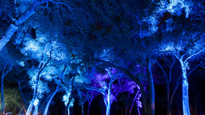 ci0d5xparlfvpa35yzyh - Forest Of Light Descanso Gardens December 15