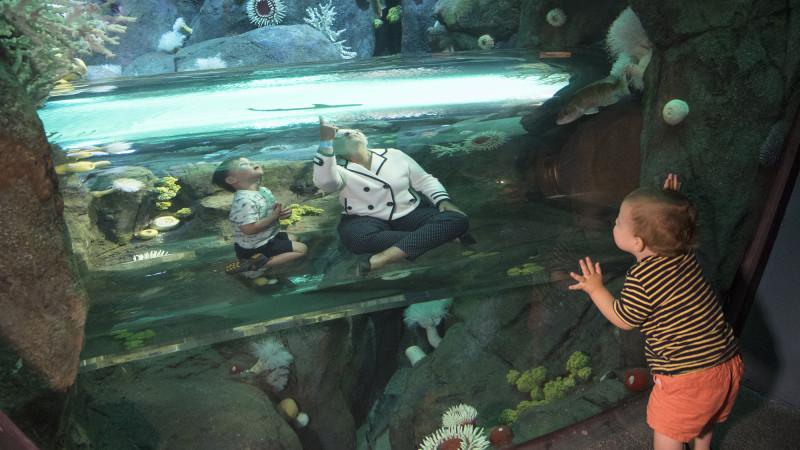 Get A First Look At The New York Aquarium S New Shark Exhibit