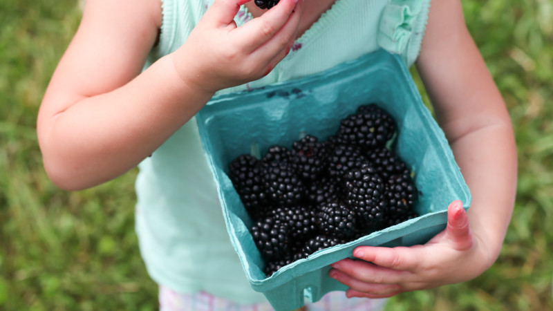 5 Best Pick-Your-Own Farms in the D C  Area - Mommy Nearest
