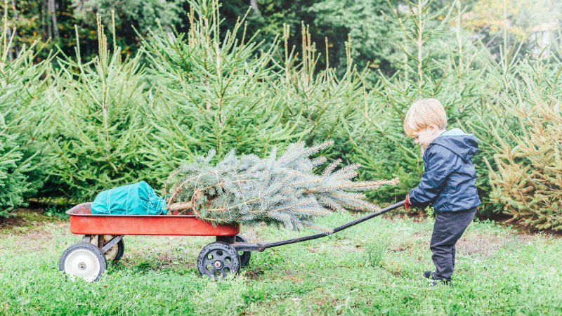 Christmas In Los Angeles.Where To Cut Your Own Christmas Tree In Los Angeles Mommy