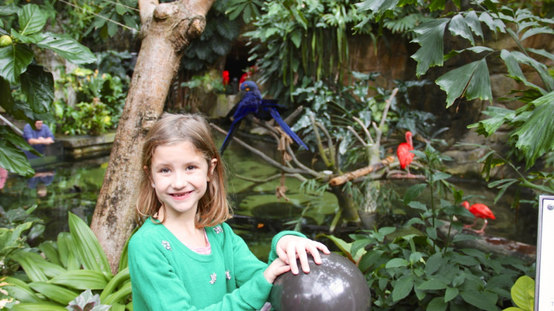 Image for A Parent's Guide to Navigating Moody Gardens With Kids article