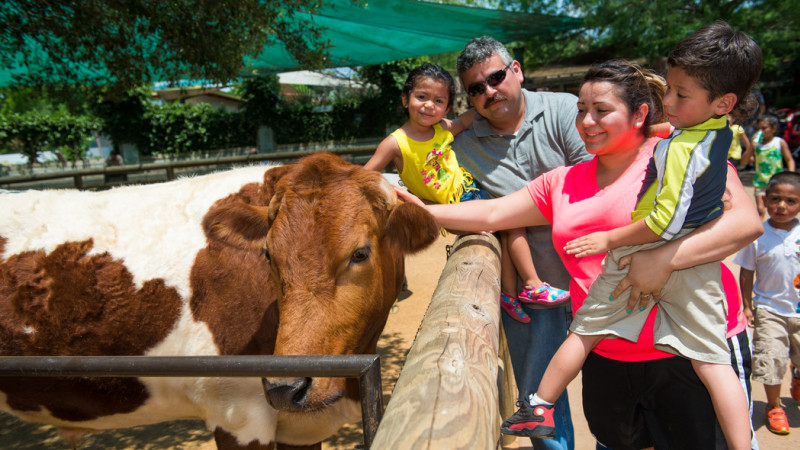 Image for 15 Best Attractions for Families in Houston article