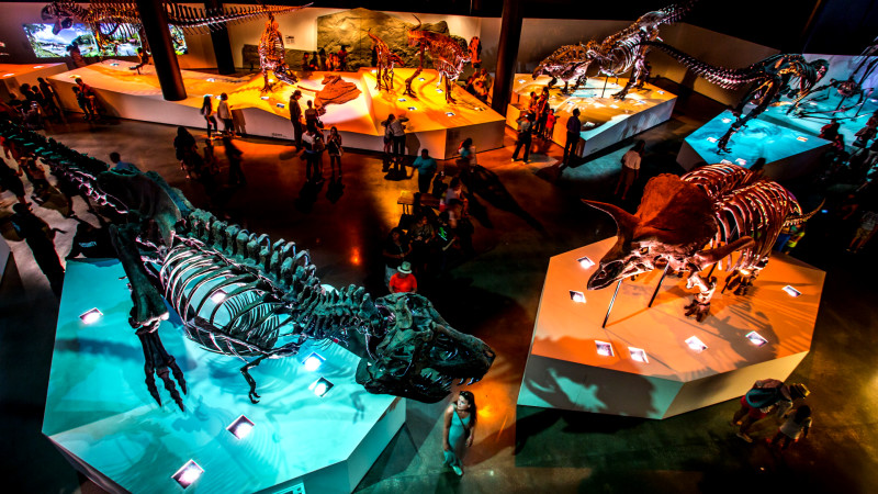 Image for 30 Museums Every Houston Kid Should Visit At Least Once article