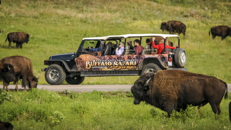 10 Best Safaris for Families in the United States - Mommy
