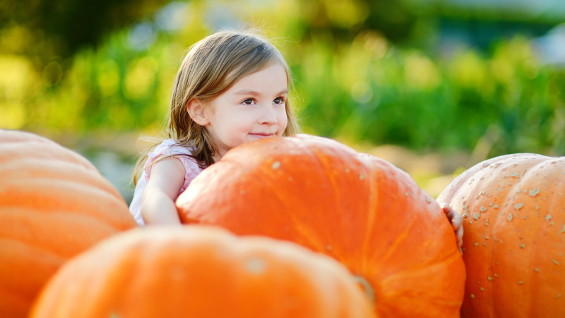 Image for 5 Awesome Pumpkin Patches in the Houston Area article
