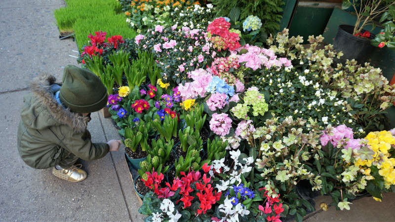 Image for Family-Friendly Walking Tour of NYC's Flower District article