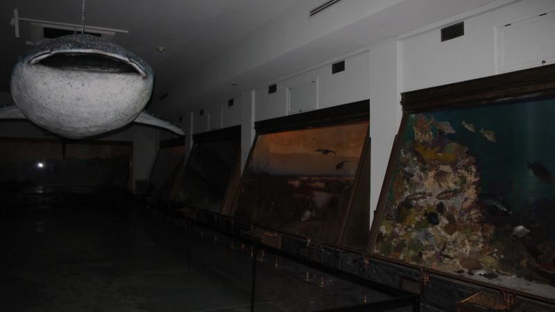 Must Do: Vanderbilt Museum and Planetarium - Mommy Nearest