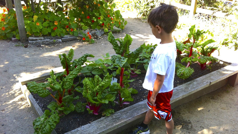 5 Family Friendly Farms And Gardens In The Bay Area Mommy Nearest
