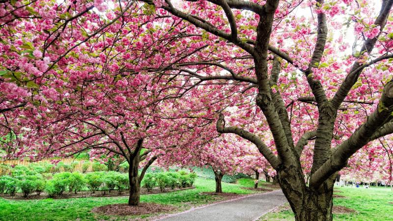 image for must do brooklyn botanic garden article - Brooklyn Botanic Garden