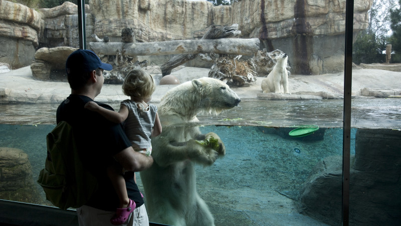 Tips for Visiting the San Diego Zoo with Kids - Mommy Nearest