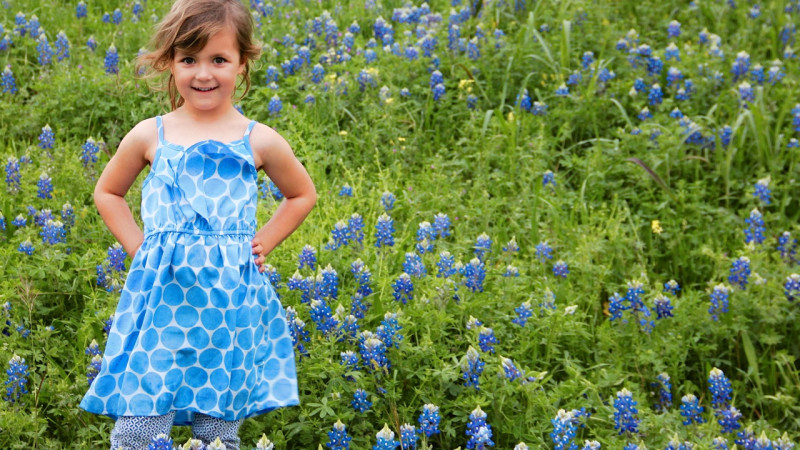 Bluebonnets in Houston
