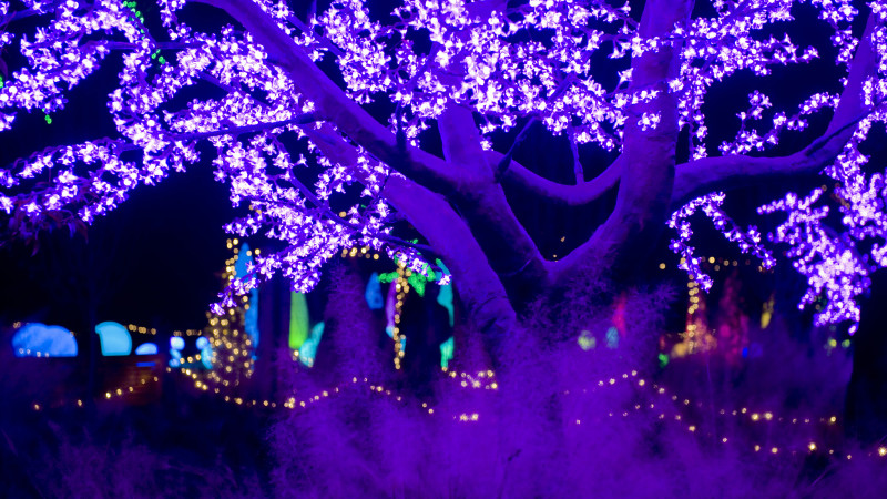 Holiday Light Show Returns To Atlanta Botanical Garden Mommy Nearest