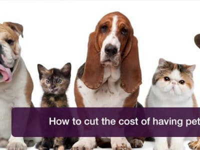 Pet costs breaking the bank? Here's how to cut them.