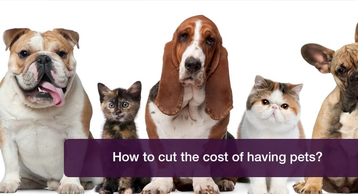 How to cut pet costs without compromising on care