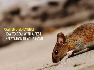 Cash Emergency Bible: How to deal with a pest infestation in your home