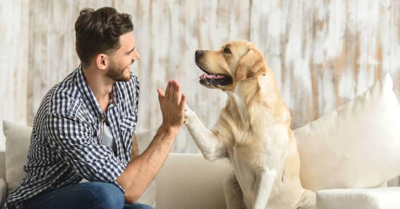 Man with dog on sofa