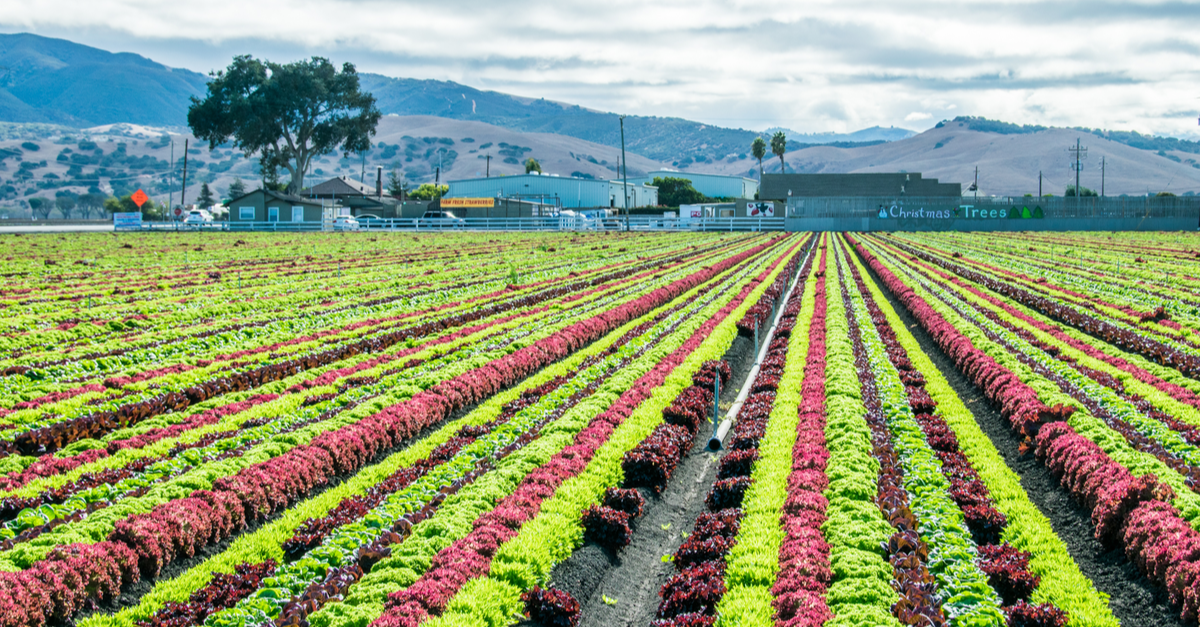 Agriculture in the Central Valley, Salinas, California.