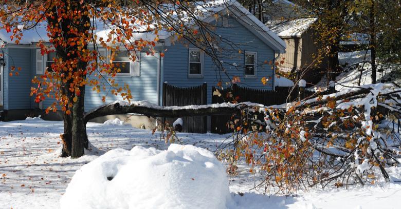 A tree is broken in half after a winter storm