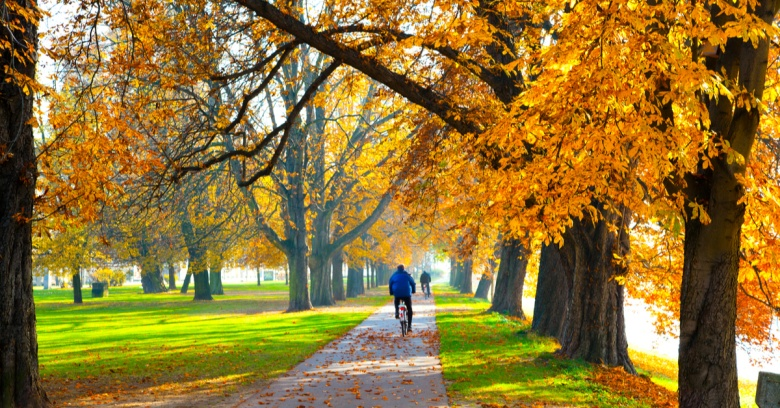 A man rides his bike on a tree-lined trail in the fall.