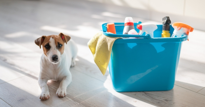 A puppy lies on the floor next to a bucket of cleaning supplies