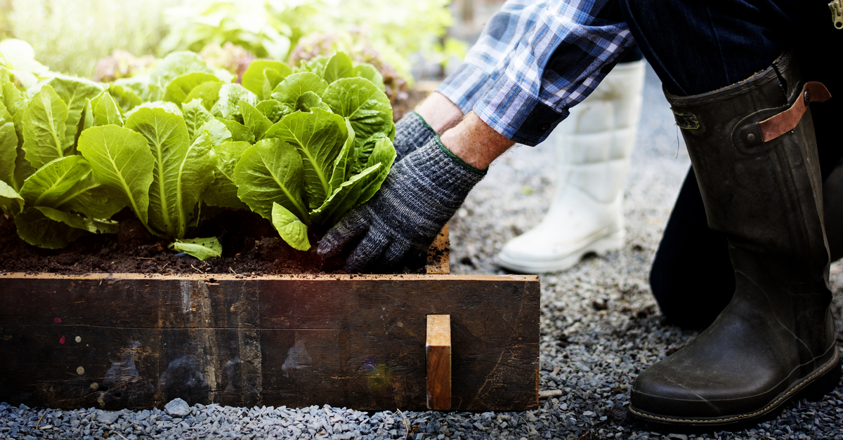 A person is shown cultivating vegetables in a home garden.