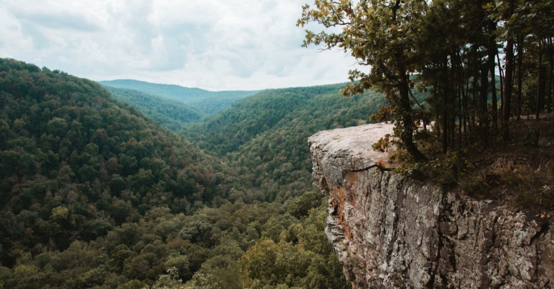 Trees in Arkansas.