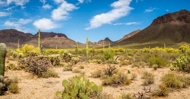A desert in Arizona.