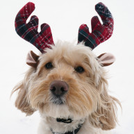 Rosewood Tartan Christmas Reindeer Antlers for Dogs