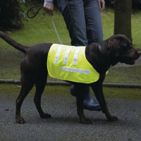 Rosewood Pet Hi-Visibility Reflective Dog Coat