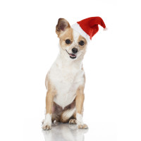 Armitage Christmas Santa Hat for Dogs