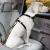 Kurgo Direct to Seatbelt Dog Tether