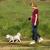 Halti Retractable Dog Lead