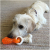 Rosewood Duo Dental Tug Puppy Bone Dog Toy