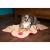 Scruffs Snuggle Dog Blanket