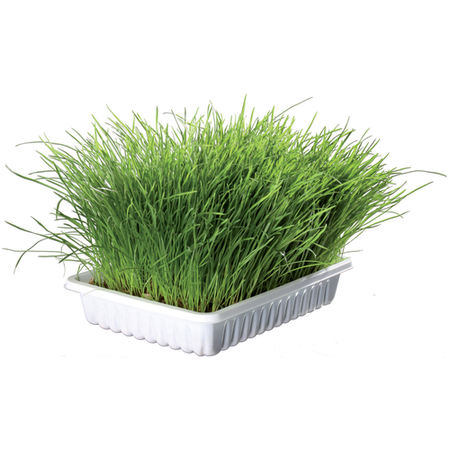 Trixie Grow Your Own Cat Nibble Grass 100g with Seed Tray