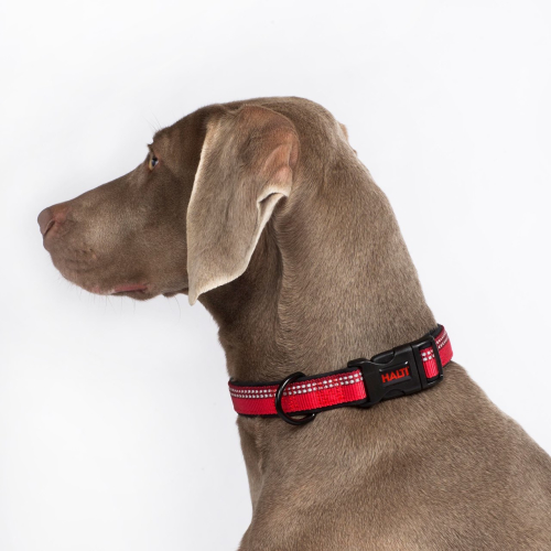 Halti Dog Collar Purple