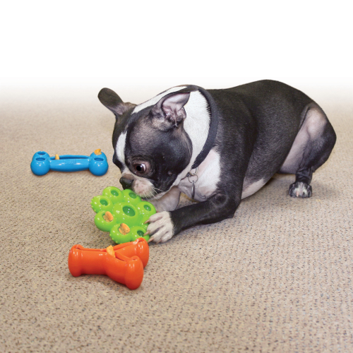 KONG Quest Star Pods for Dogs
