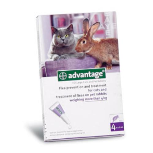 Advantage Flea Control For Cats Uk