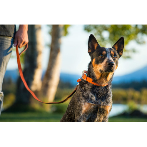 Ruffwear Frisco Leather Leash for Dogs