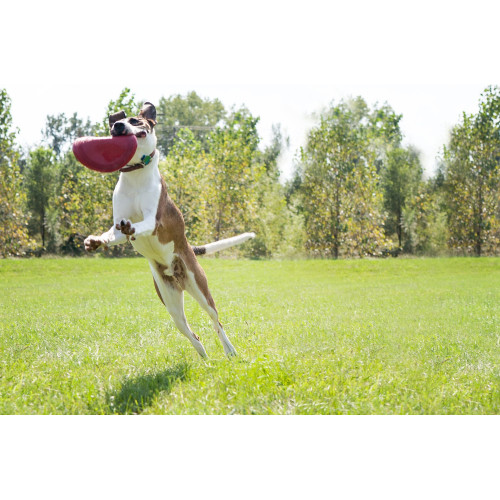 KONG Flyer Frisbee Dog Toy