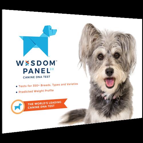 Wisdom Panel 2.0 Dog DNA Testing Kit DNA Testing Kit