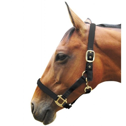JHL Full Padded Headcollar for Horses Black